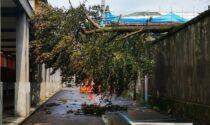 Violento acquazzone su Rivarolo. Albero caduto in centro, sottopasso allagato
