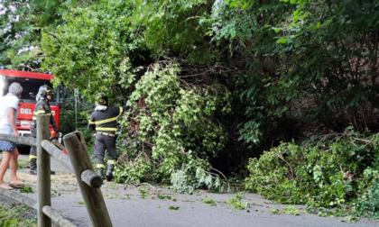 Crolla un grosso albero sulla strada vicinale della Turca