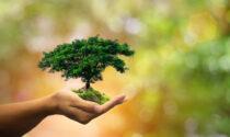Mappano più verde: pianta 2.475 alberi