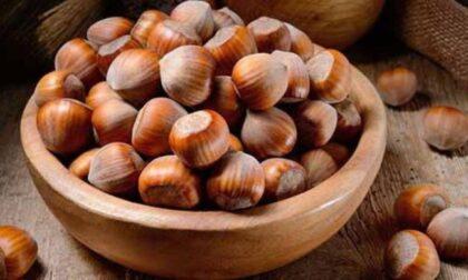 Ricercatori torinesi scoprono la proteina che provoca allergia alla nocciola