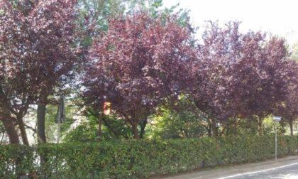 Donare un albero per la città e creazione mappa digitale