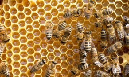 La Regione stanzia 1,3 milioni per gli apicoltori