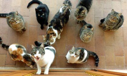 Gattara denunciata: in casa 25 gatti in precarie condizioni igieniche e una bimba