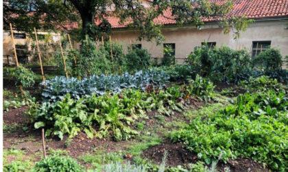 Cuorgnè ha dato vita al suo primo orto giardino sociale