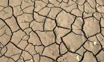 Caldo e siccità: danni all'agricoltura in Piemonte