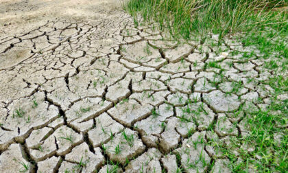 Emergenza siccità in Piemonte, raccolti a rischio