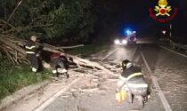Albero abbattuto sulla carreggiata, intervento dei Vigili del fuoco