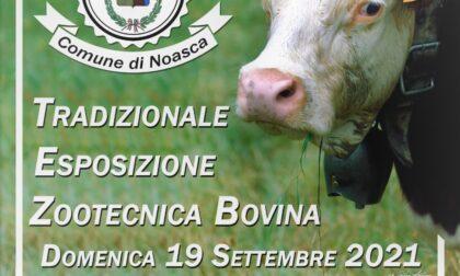 A Noasca domenica 19 appuntamento con l'Esposizione zootecnica